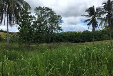 Land for sale embilipitiya 50 acres